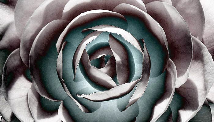 [ Inverted close-up of an optimized flower ]